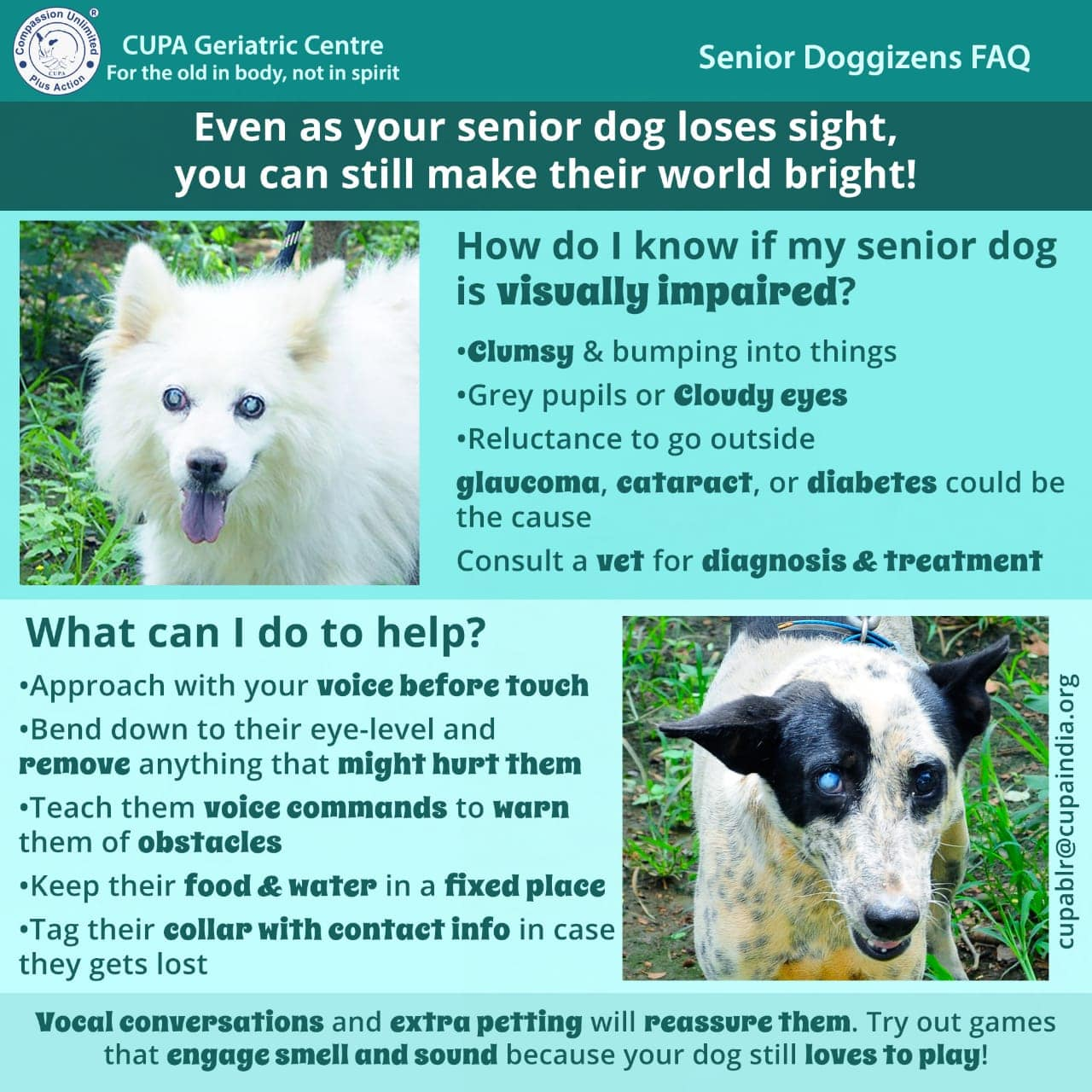 EVEN AS YOUR SENIOR DOG LOSES SIGHT, YOU CAN STILL MAKE THIER WORLD BRIGHT!