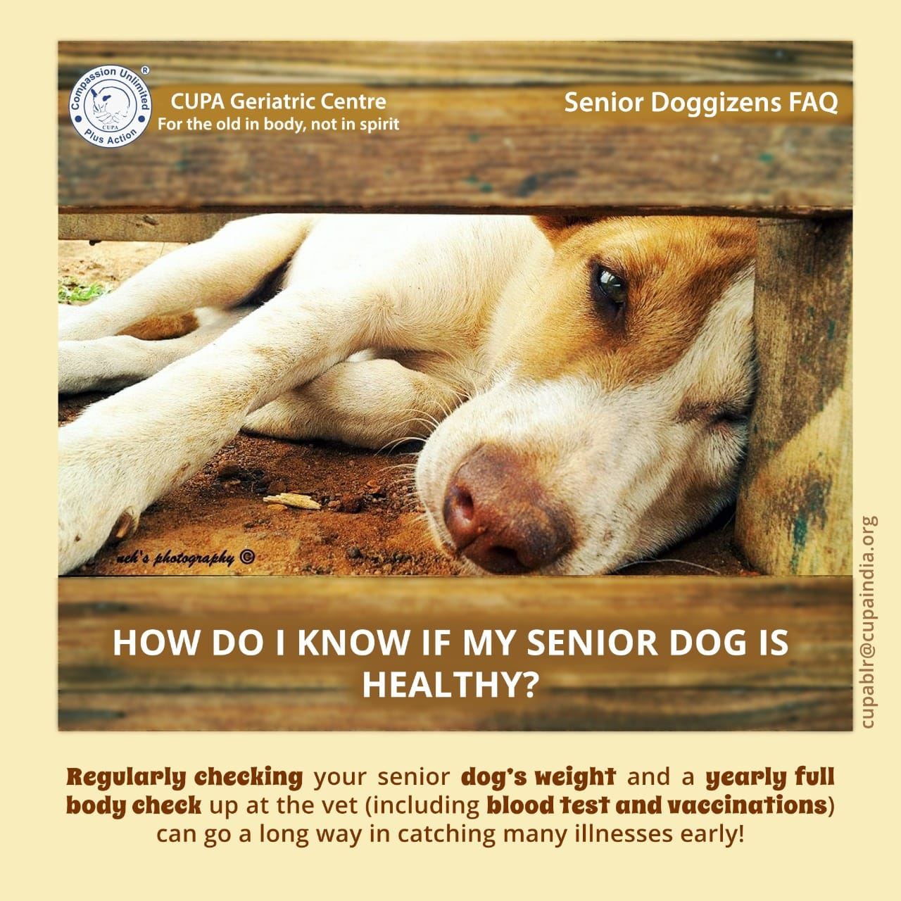 How do i know if my senior dog is healthy ?